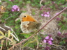 db_Small_Heath