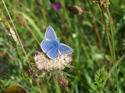 db_Common_Blue1