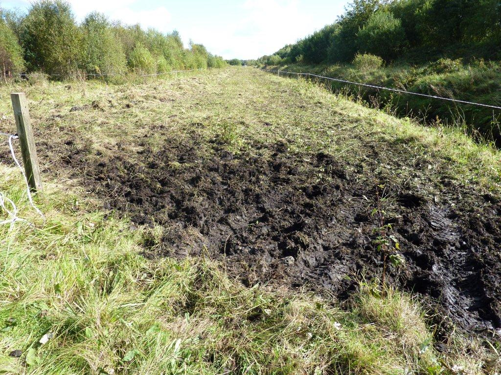 poaching-of-some-areas-of-grassland
