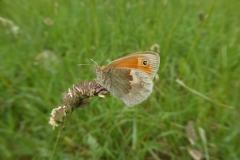 34. Small Heath.P1120343 (2)