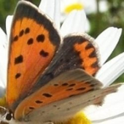 Butterfly Conservation Ireland